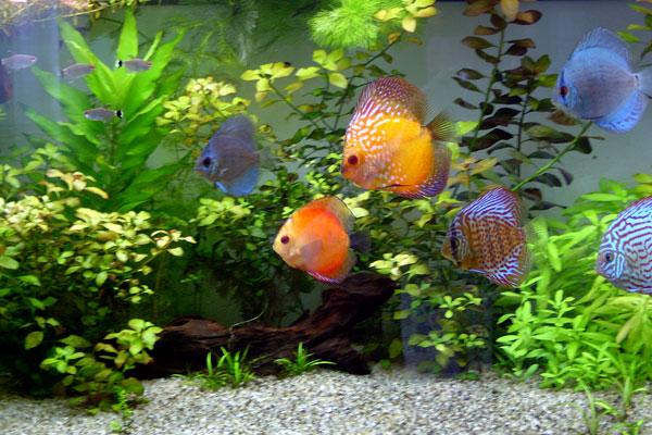 Tropical zoo acquaristica a trieste for Pesci per acquario dolce